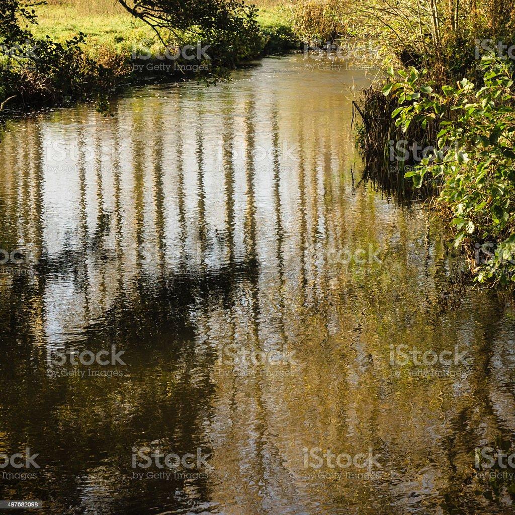 Reflections of Poplars stock photo
