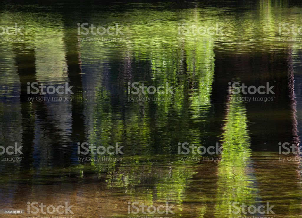 Reflections of Trees stock photo