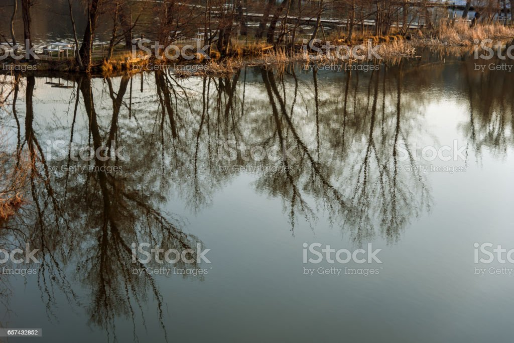 Reflections of winter trees in a lake stock photo