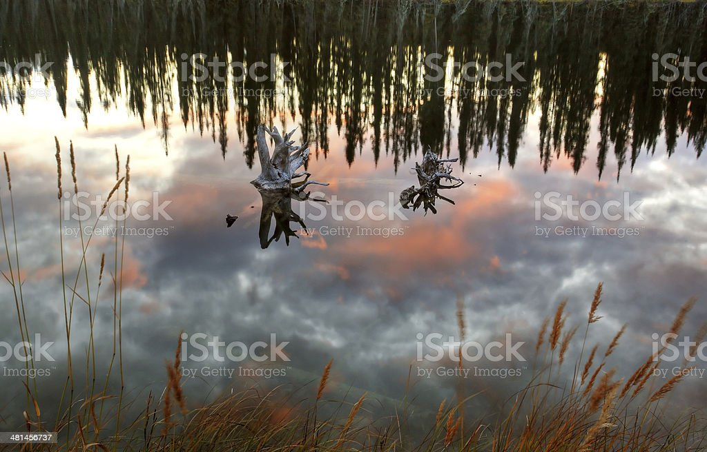 Reflections off pond in British Columbia stock photo