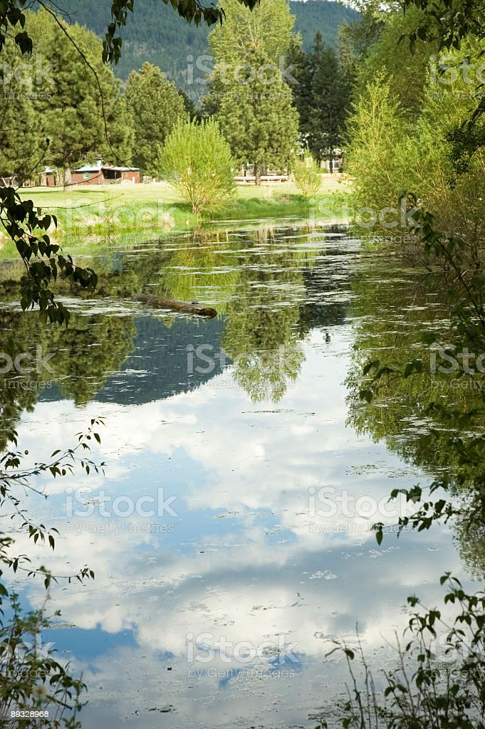 Reflections on a pond 2 royalty-free stock photo