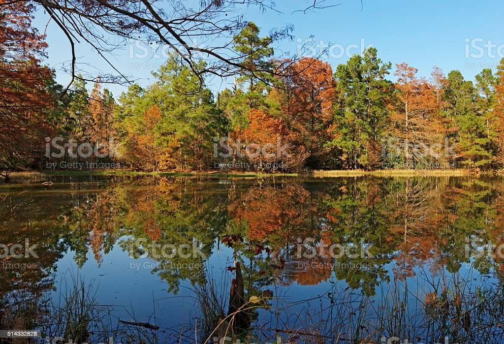Reflections on a Pond-W G Jones State Forest stock photo