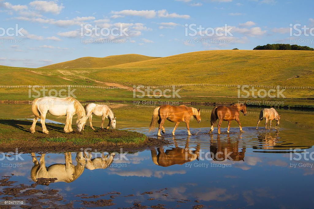 Reflects of horses on the lake stock photo