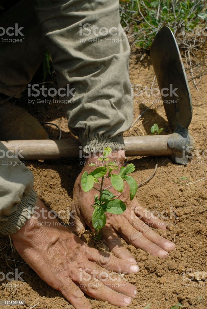 reforest stock photo