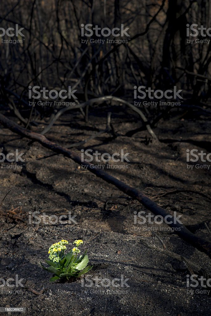 Reforestation stock photo