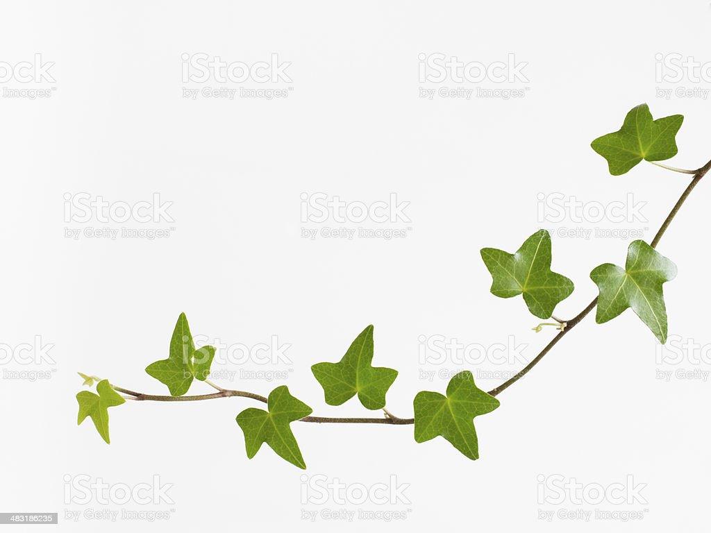 Refreshing green liana stock photo