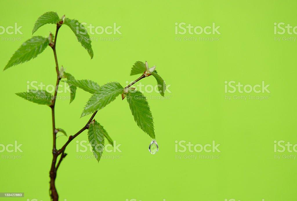 refreshing green royalty-free stock photo
