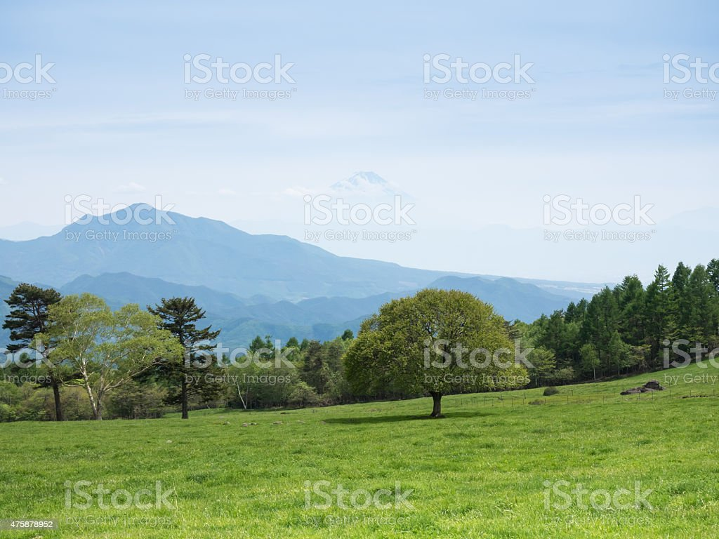 Refreshing green plateau in early summer Japan stock photo
