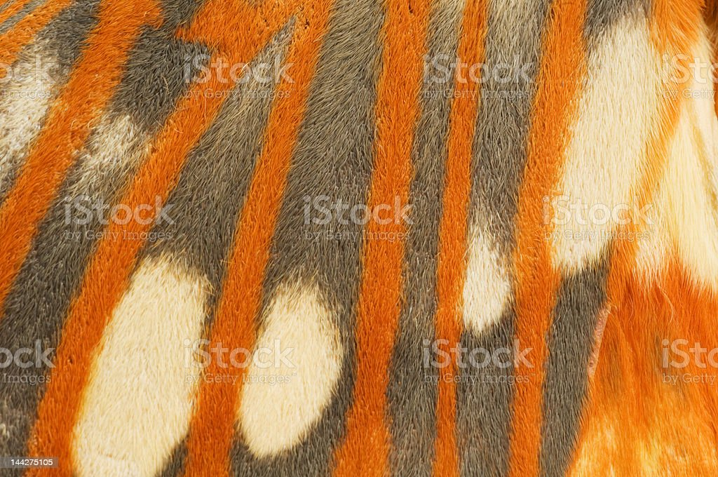 Regal Moth wing close-up stock photo