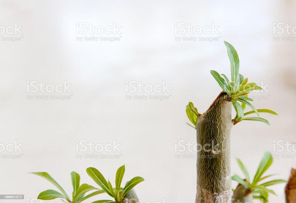 regeneration stock photo