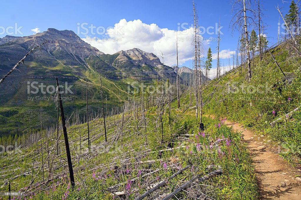 Regrowth after fire on a mountain slope royalty-free stock photo