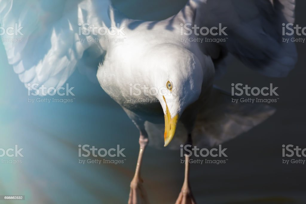 Reincarnation. Spiritual wildlife image of a white bird in the light of heavenly rays.. stock photo