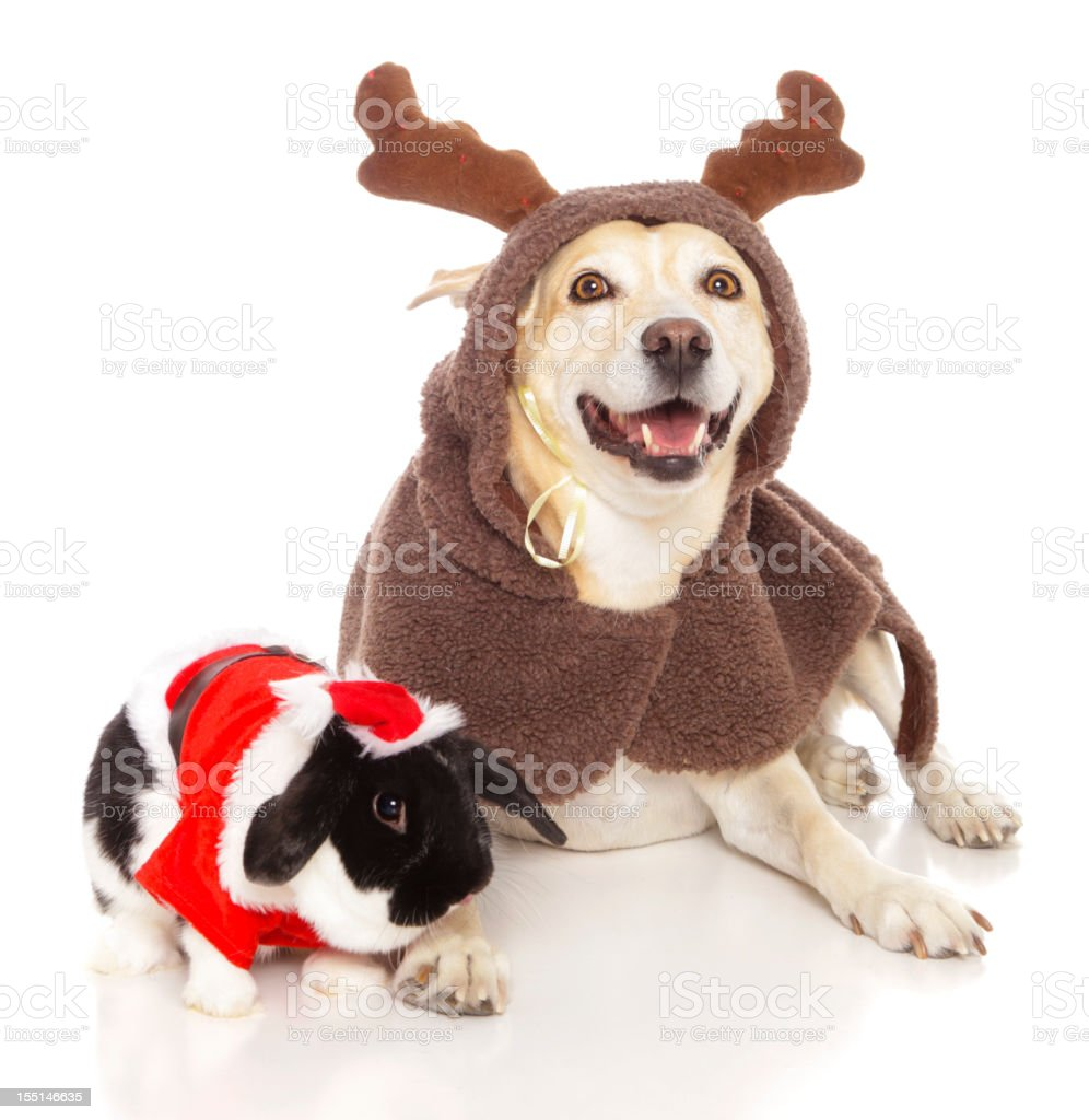 Reindeer Dog with Santa Bunny stock photo