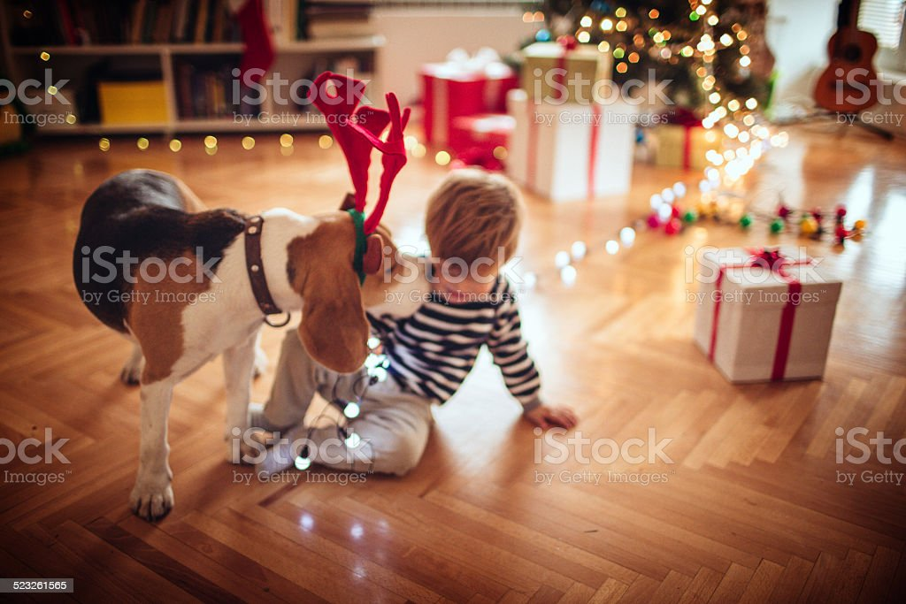 Rudolph kissing a little boy for Christmas stock photo