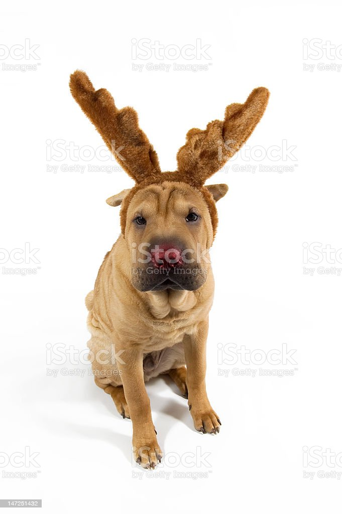 Rudolph the Red-Nosed Reindeer Puppy stock photo