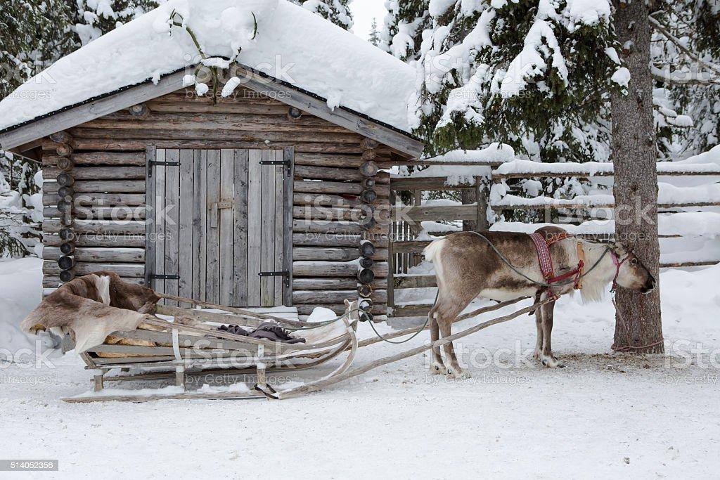 reindeer sleigh ride stock photo