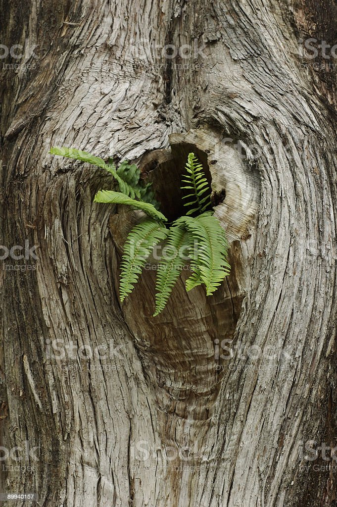 Relationships - Fern and Tree royalty-free stock photo