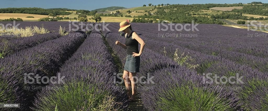 Relax and Enjoy Lavender Fields of Provence royalty-free stock photo
