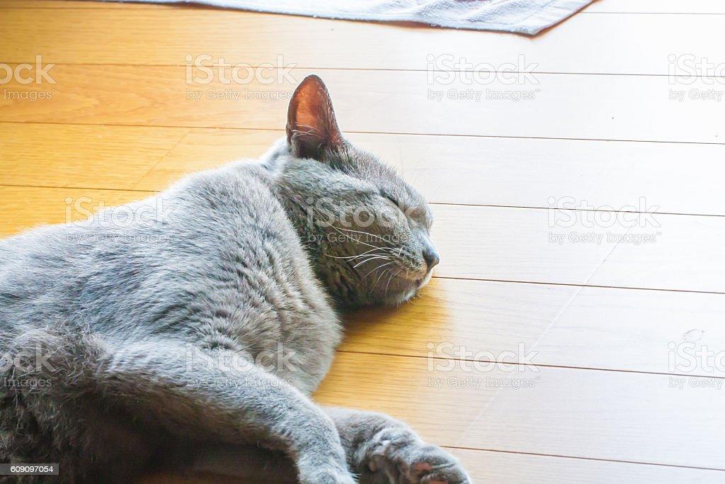 Relax gray cat stock photo