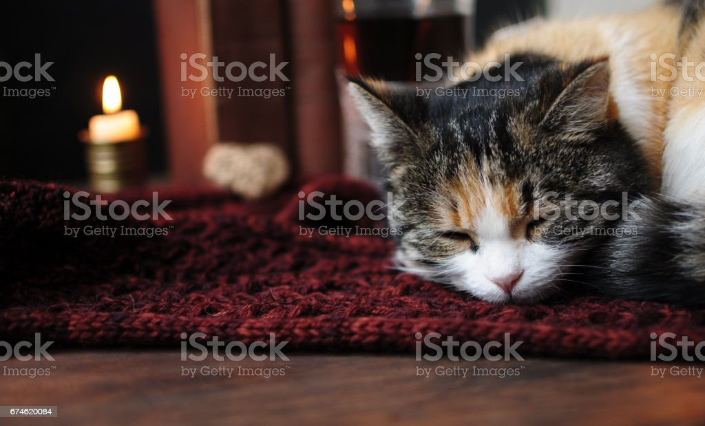 Relax in a cozy place stock photo