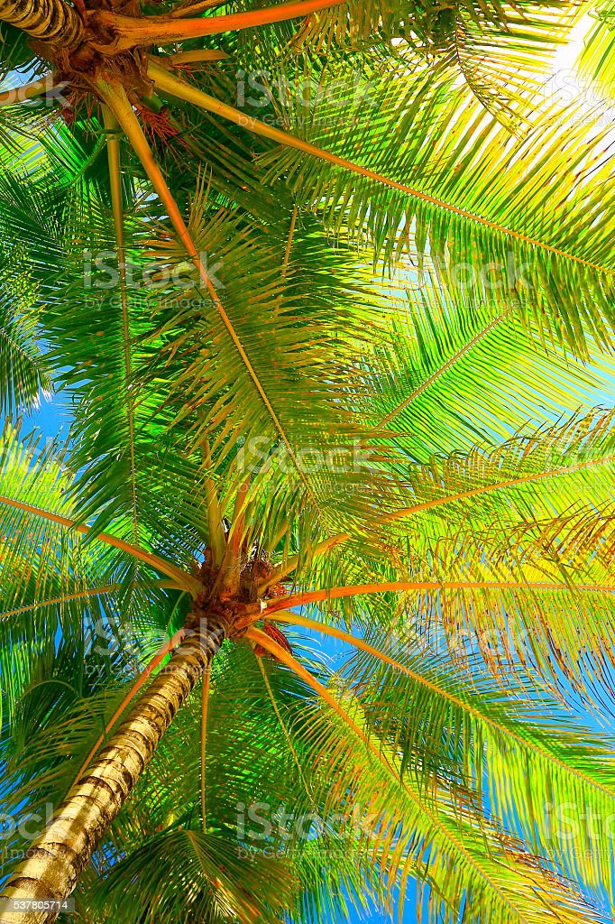 Relax in Tropical paradise, Just below coconut palm trees shadow stock photo