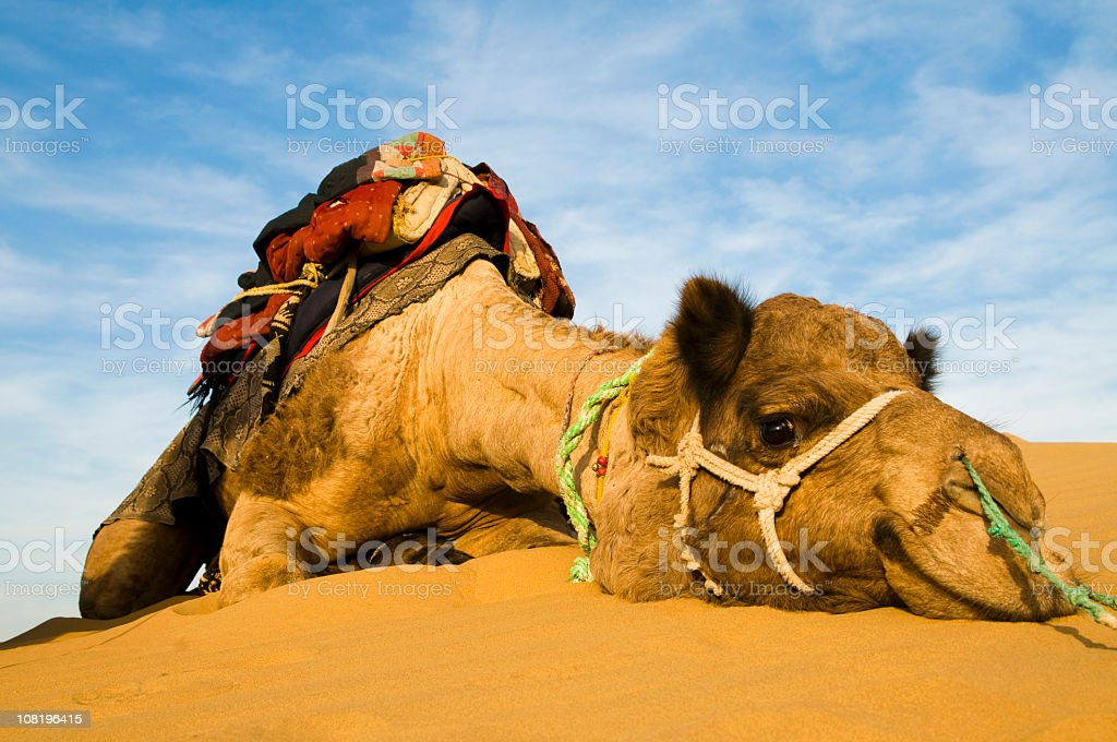 Relax! royalty-free stock photo