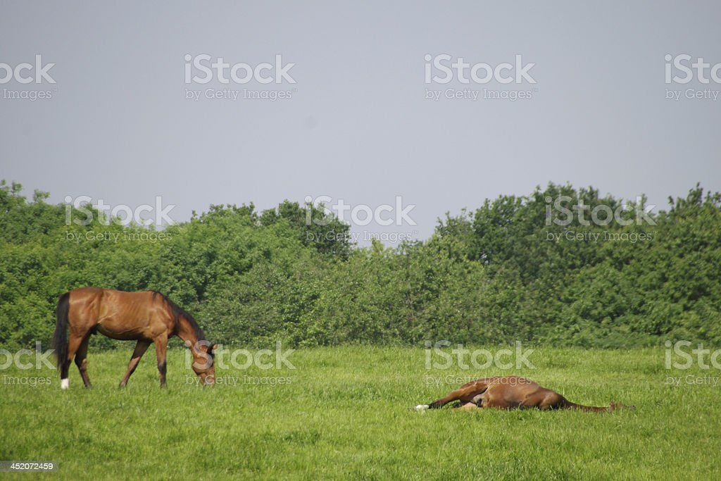 Relaxation in the meadow royalty-free stock photo