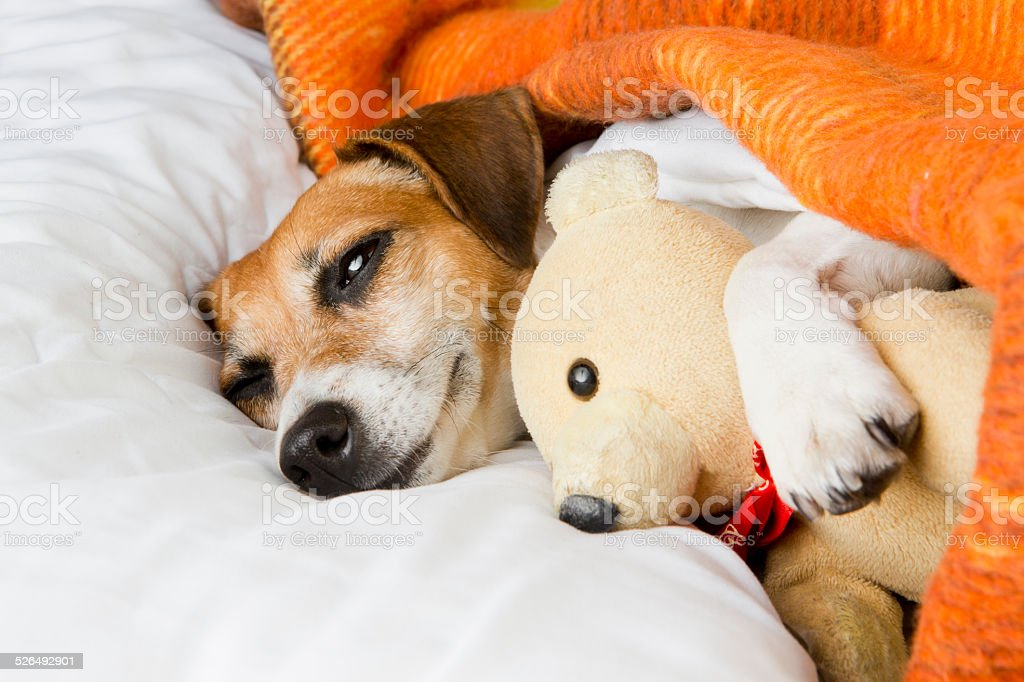 relaxation tenderness and comfort dog stock photo
