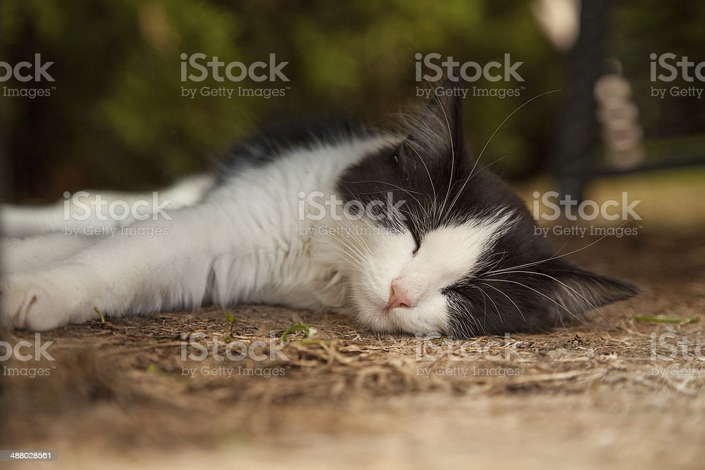 relaxed cat on a summer day stock photo