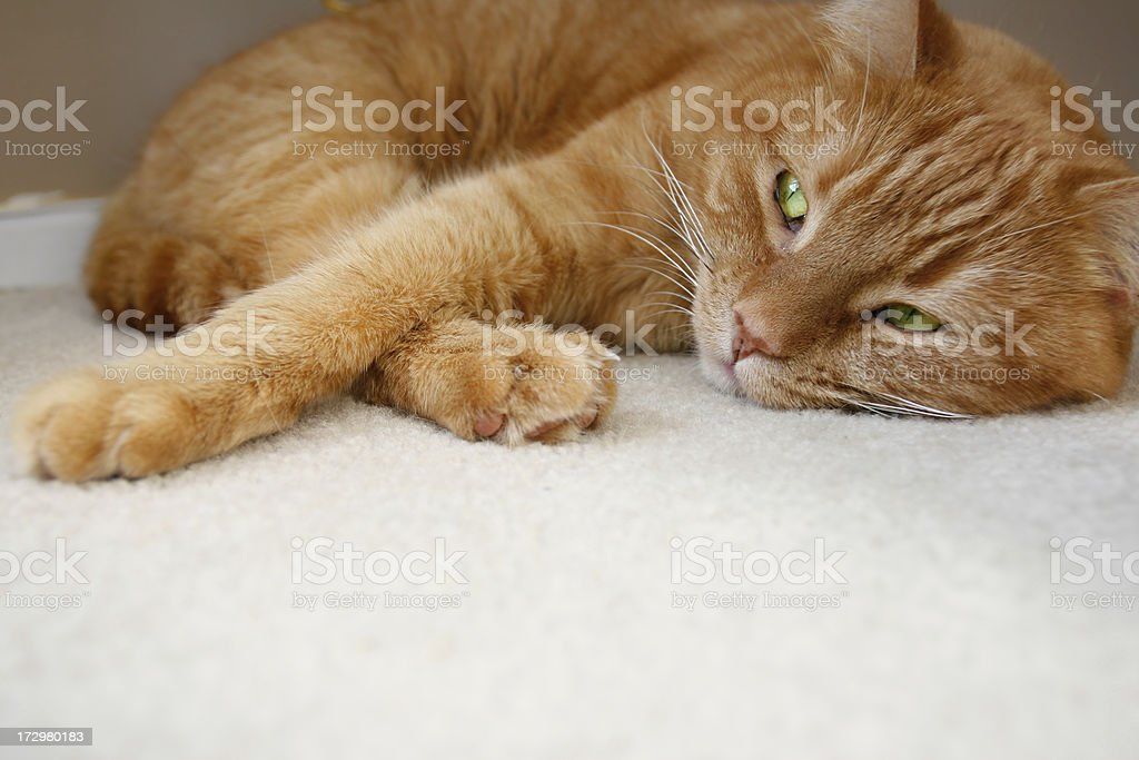 Relaxed Cat stock photo