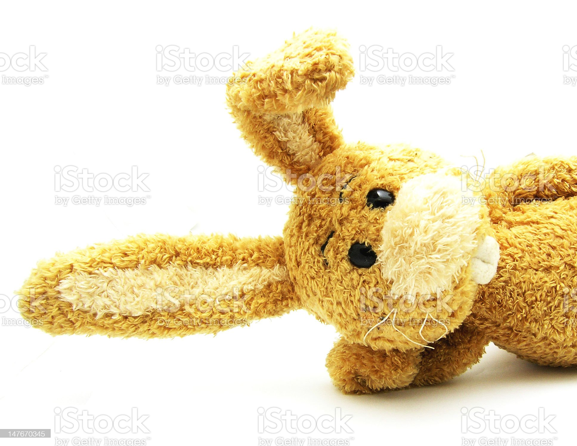 Relaxed cuddly rabbit isolated royalty-free stock photo