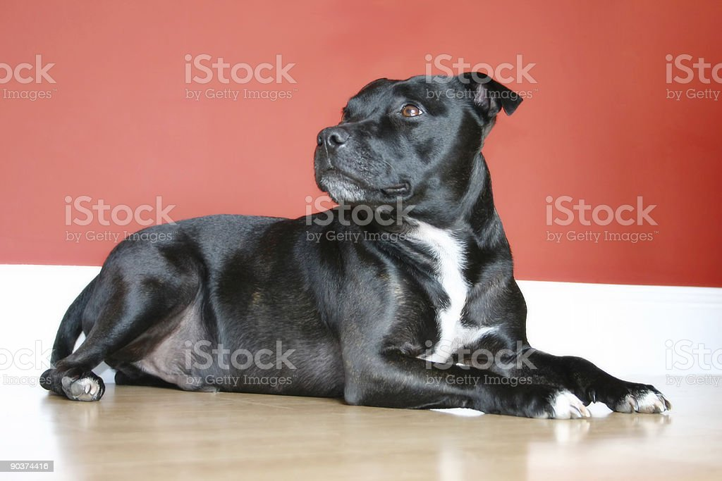 Relaxed Dog stock photo