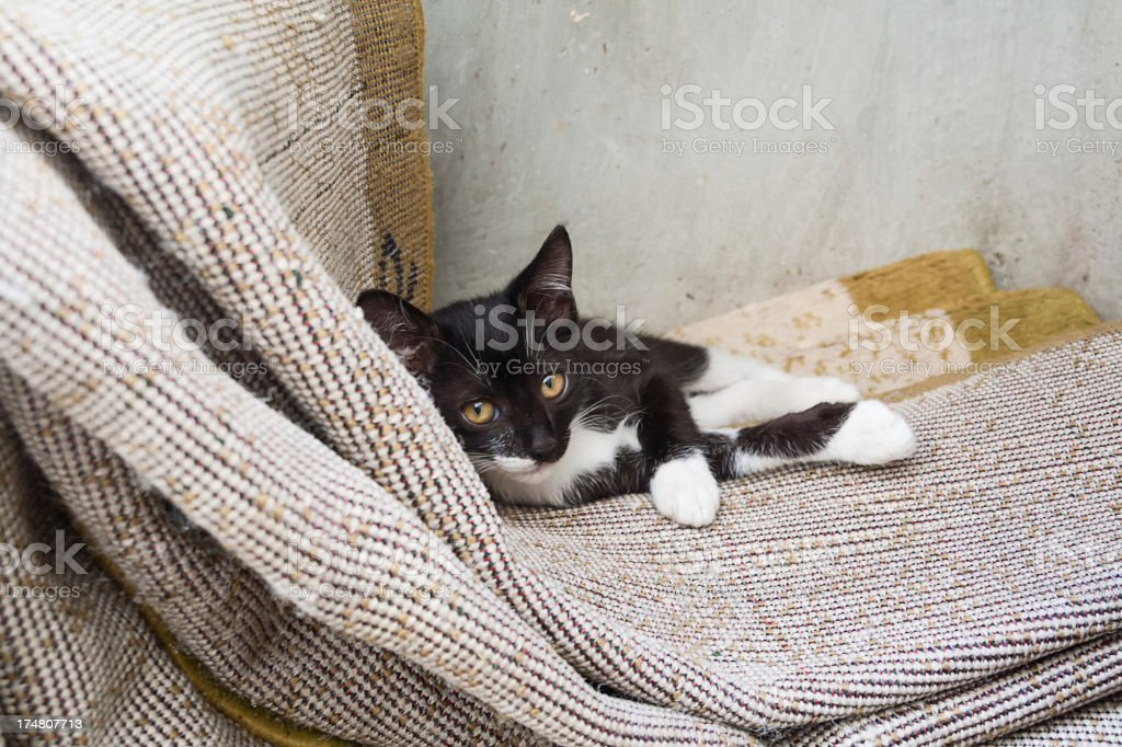 Relaxing cat royalty-free stock photo
