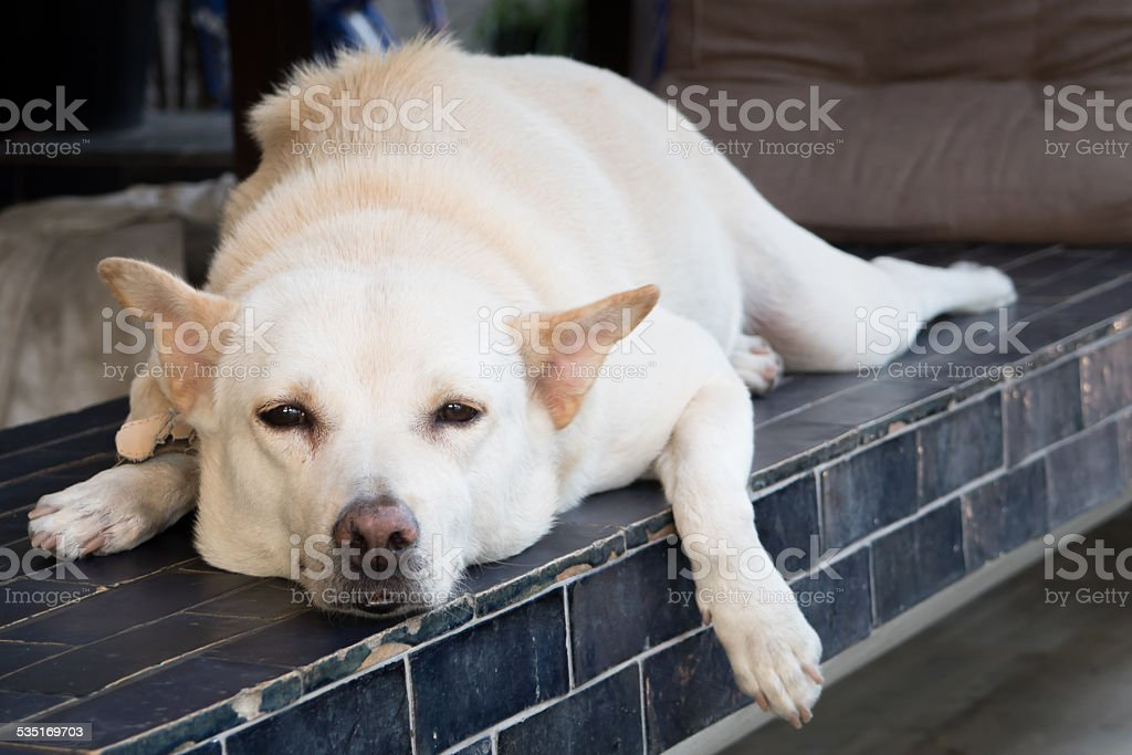 relaxing dog stock photo