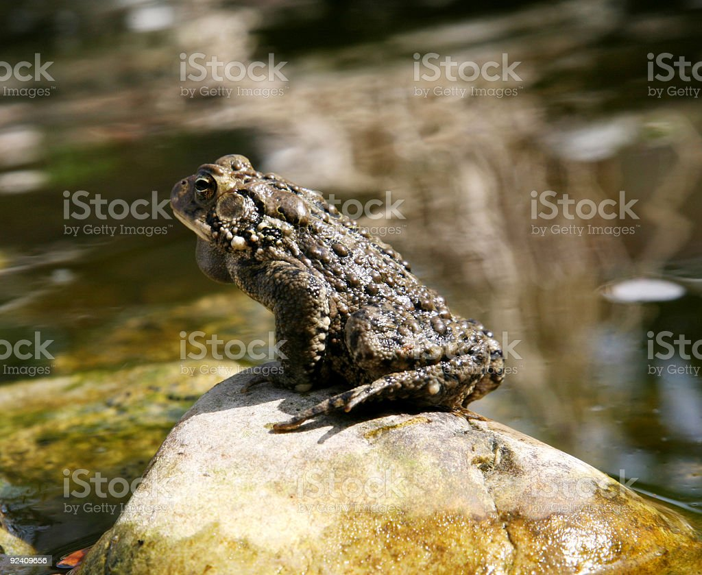 Relaxing Frog royalty-free stock photo