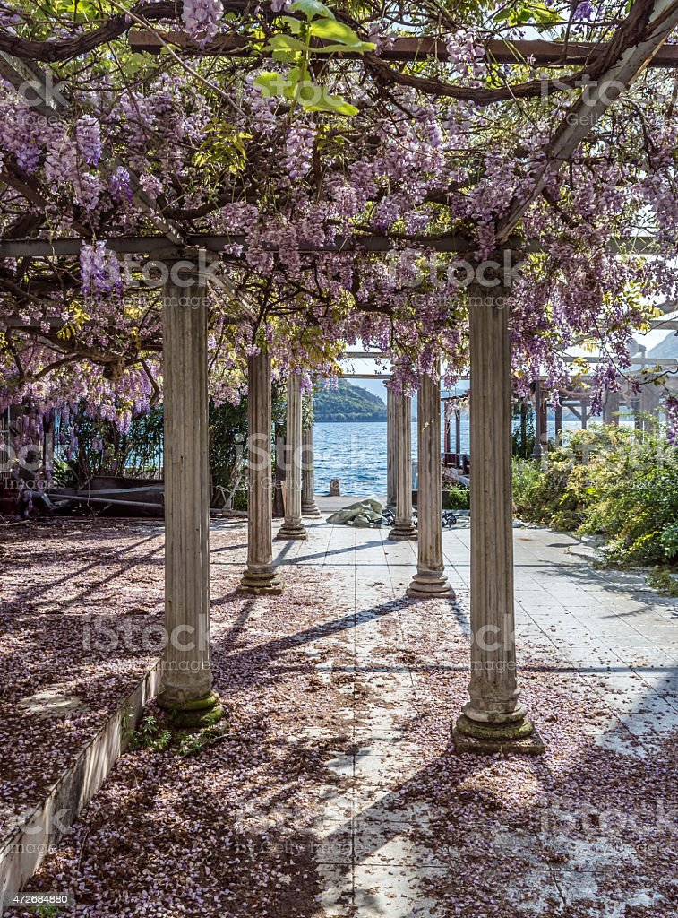 Relaxing front yard with pillars and wisteria flowers stock photo