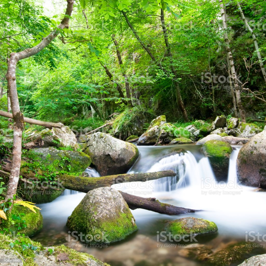 Relaxing in the wood royalty-free stock photo