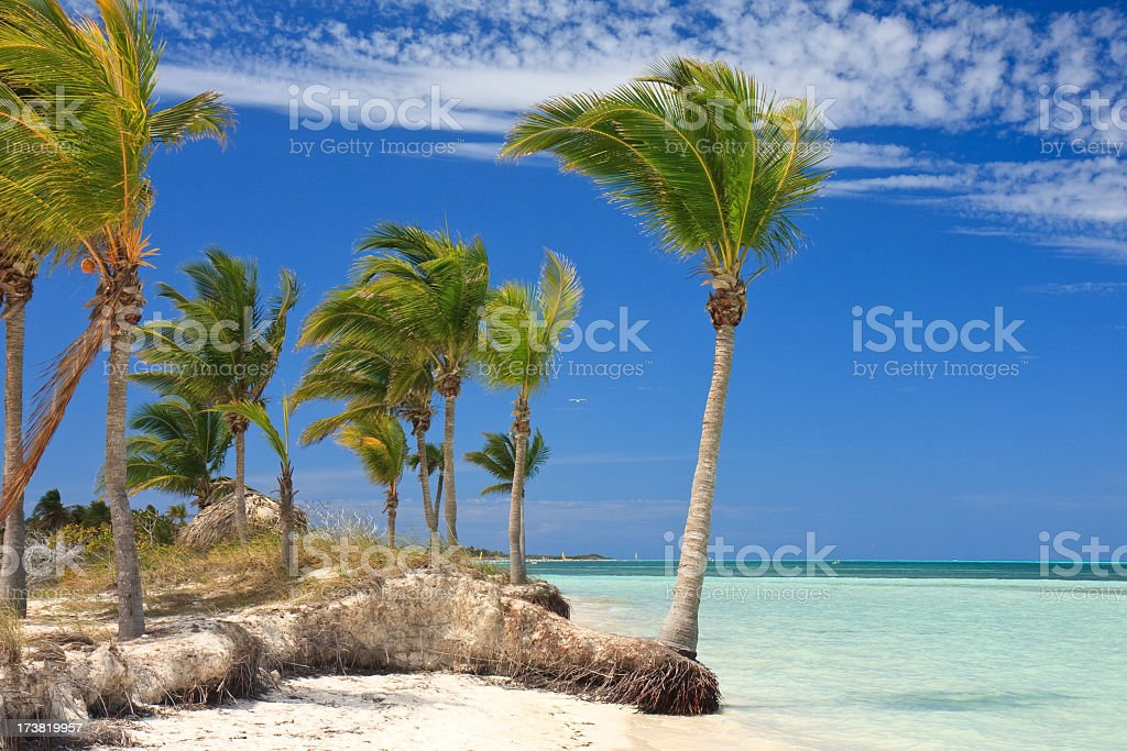 Relaxing on a tropical beach stock photo