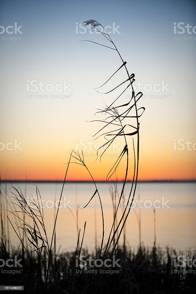Relaxing Sunset stock photo