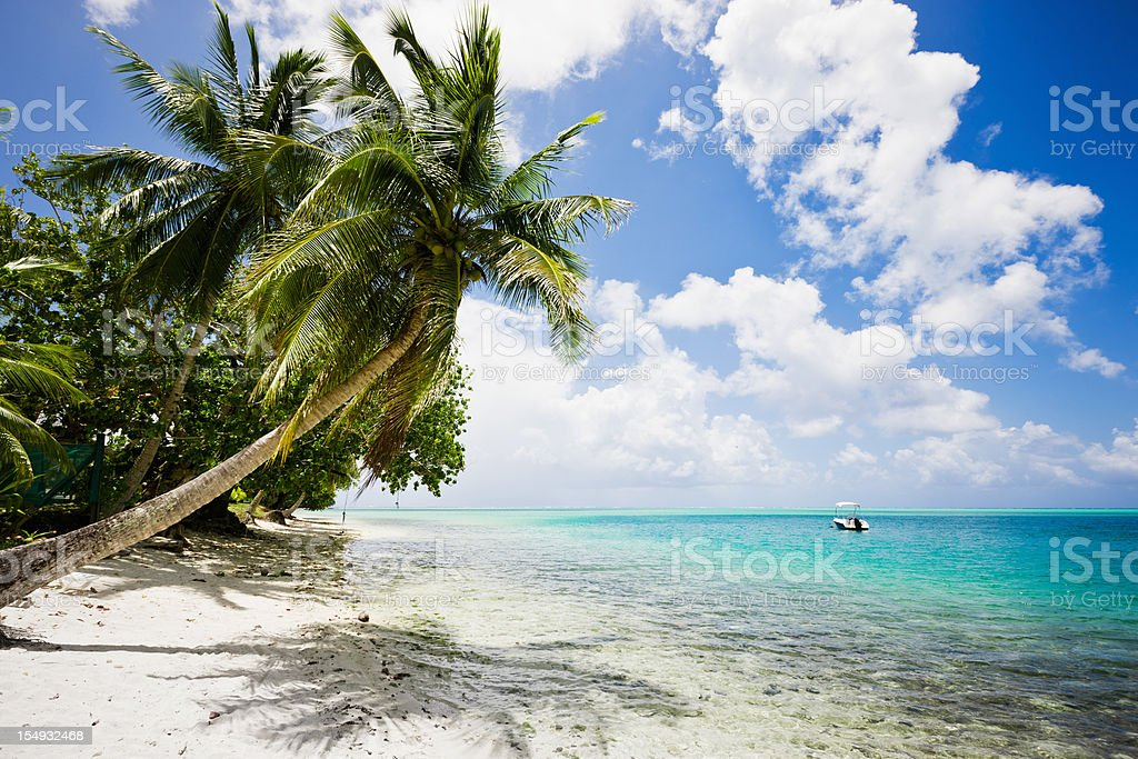 Relaxing Tropical Holidays under Coconut Palm Trees at Perfect Beach royalty-free stock photo