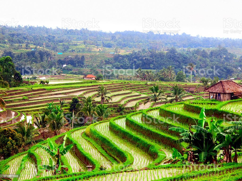 A relaxing view of a green rice terraces stock photo