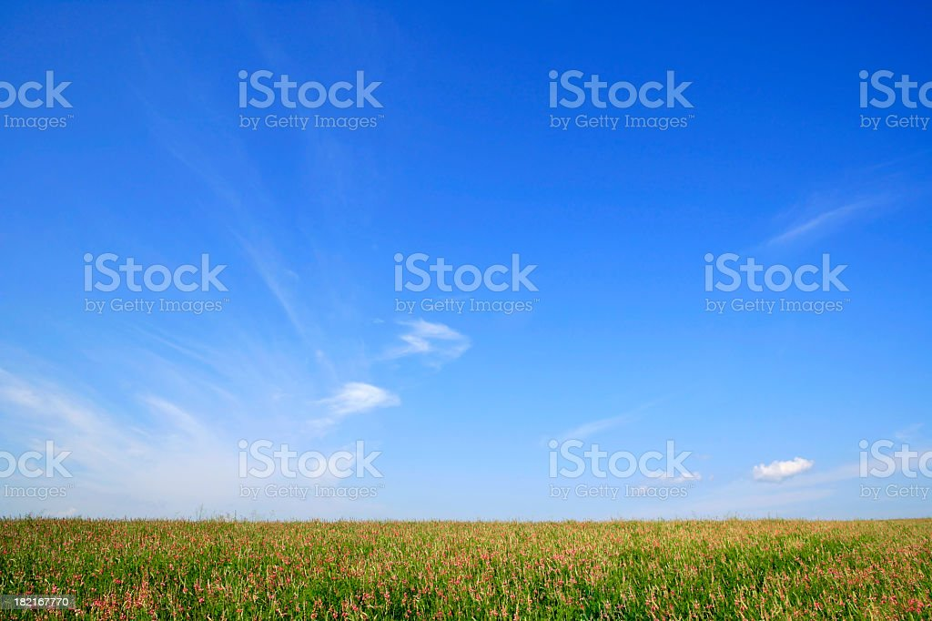 A relaxing view of a summer field with blue skies royalty-free stock photo
