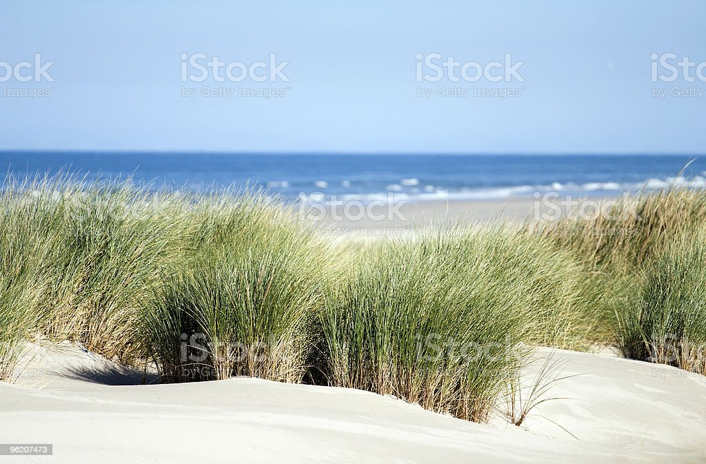 Relaxing view of dunes, grass, beach and sea stock photo