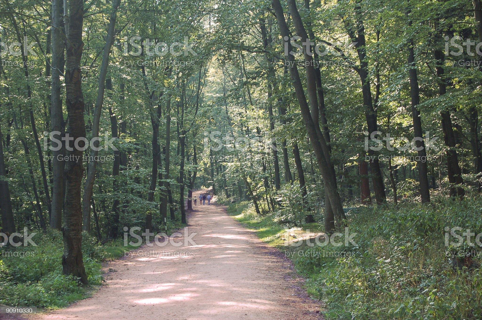 Relaxing Woodland Stroll royalty-free stock photo