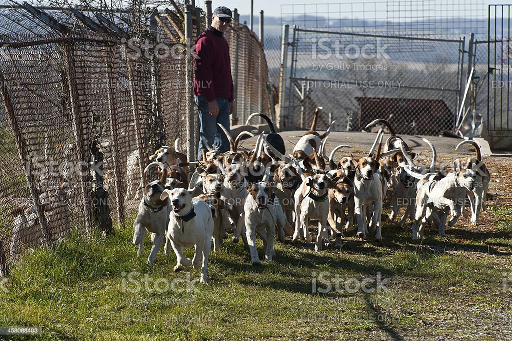 Release The Hounds! stock photo
