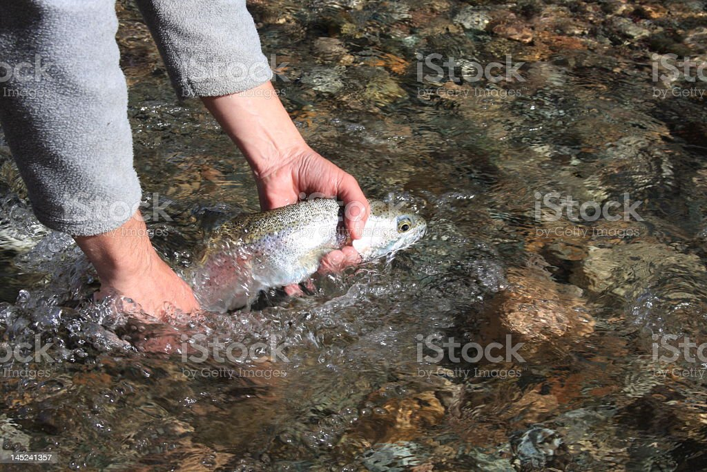 Releasing a trout (Argentina, Rivadavia River) stock photo