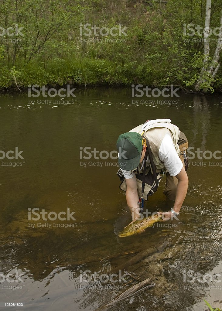 Releasing Big Trout stock photo