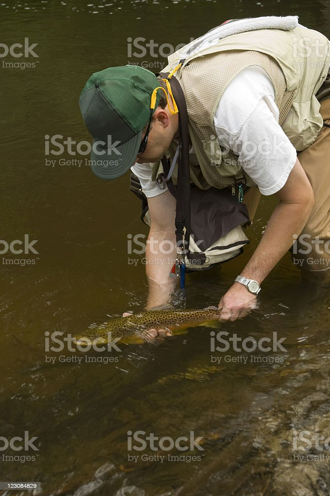 Releasing Big Trout #2 royalty-free stock photo