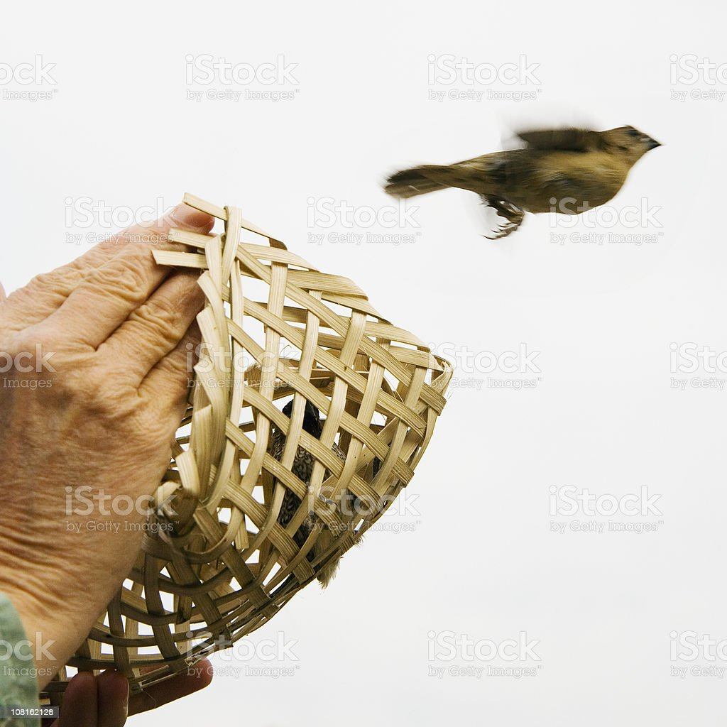 Releasing Trapped Little Bird from Wicker Cage stock photo