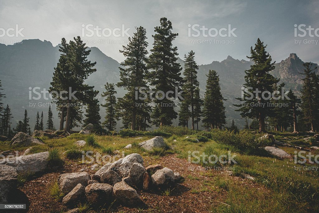 Relic cedars mountains. Forest edge among rocks. Summer photo stock photo